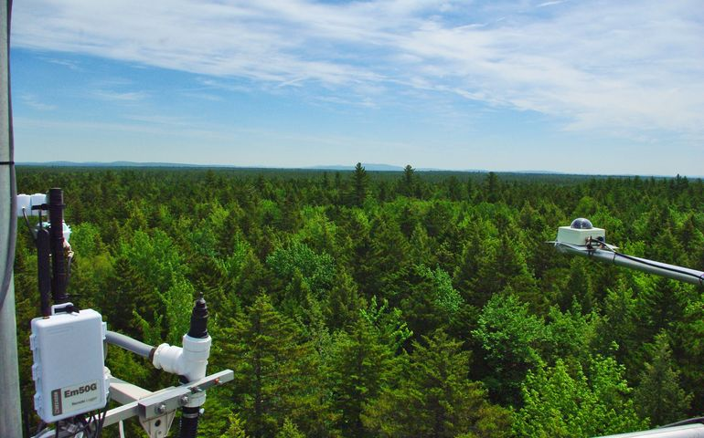 UMaine-led forest project will get up to $6M